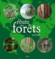 routedesforets
